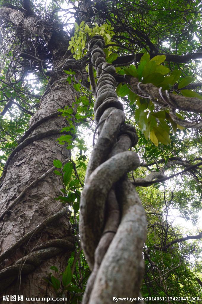 藤条与树叶在和煦春风里耳鬓厮磨,发出悦耳声响,尤如身心美妙的呻吟.